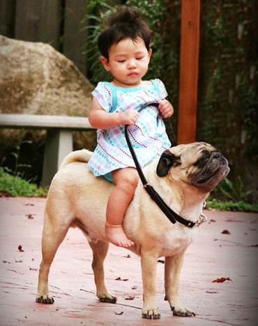 pugs and children
