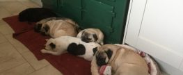 Two boys  both less than 12 months old need home